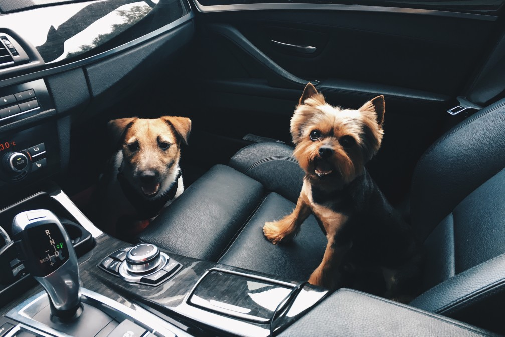 BMW maintenance cost with doggos